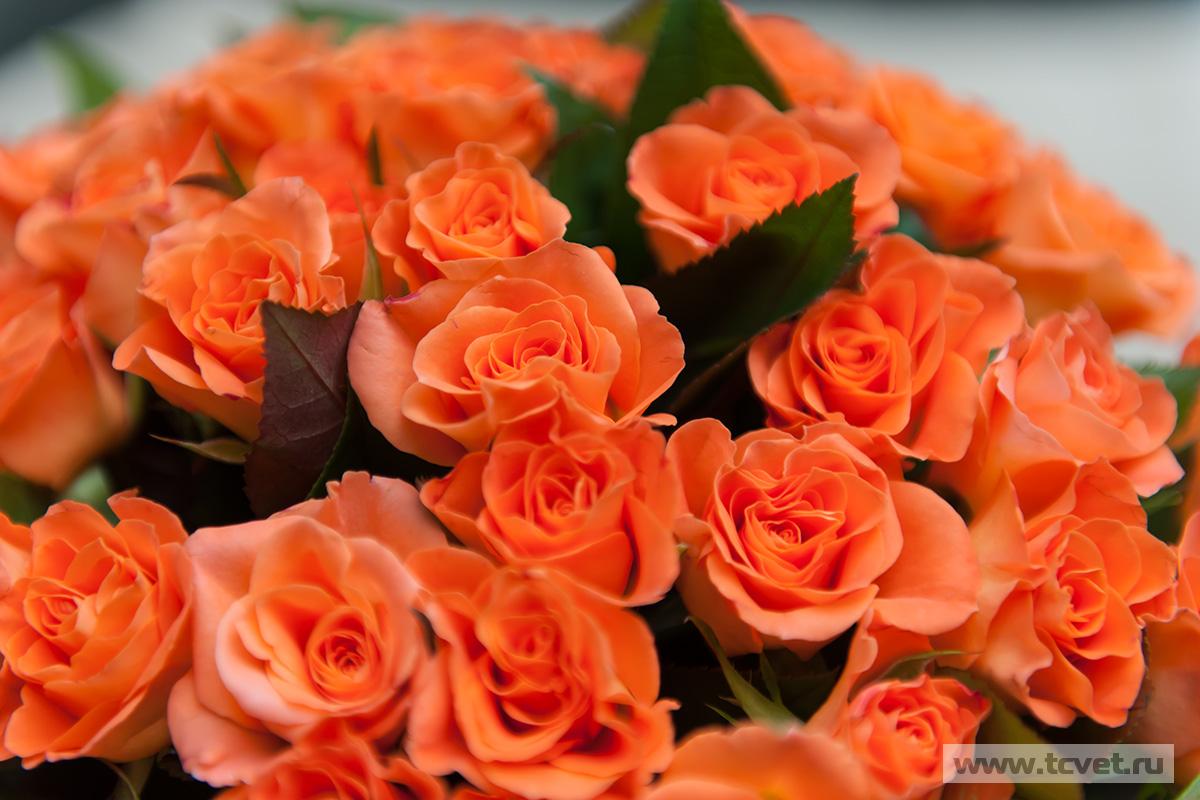 Оранжевые розы букет фото