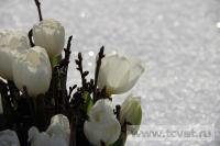 Зимняя свадьба с Белыми тюльпанами Кузьминки. Фото 37
