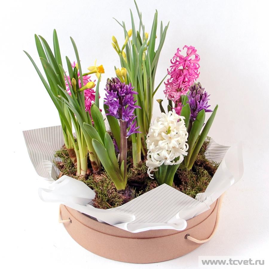 Весенний сад композиция в круглой коробке M