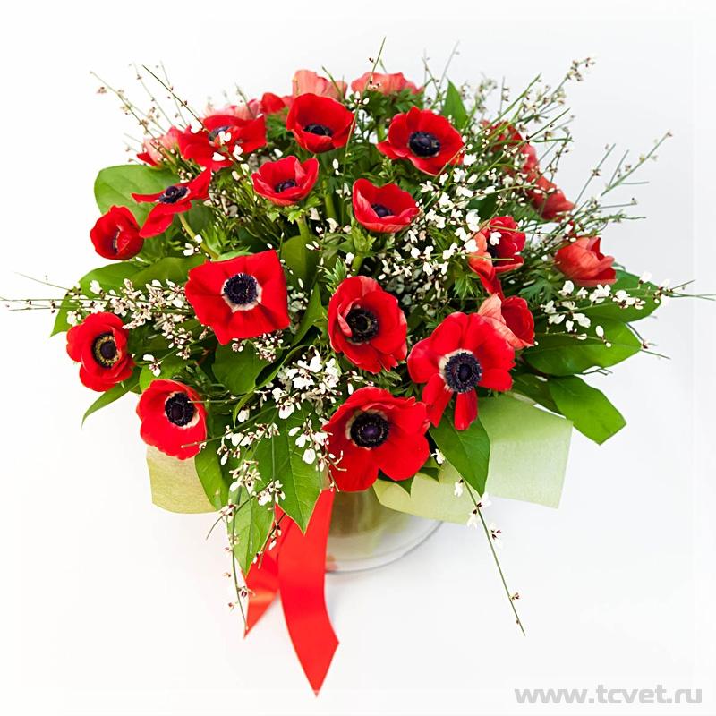 Букет-подарок Красные анемоны