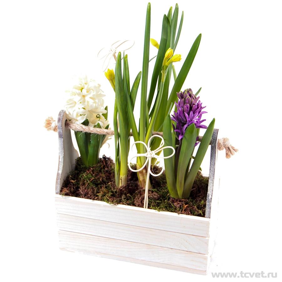 Композиция «Первоцветы» гиацинты и нарциссы