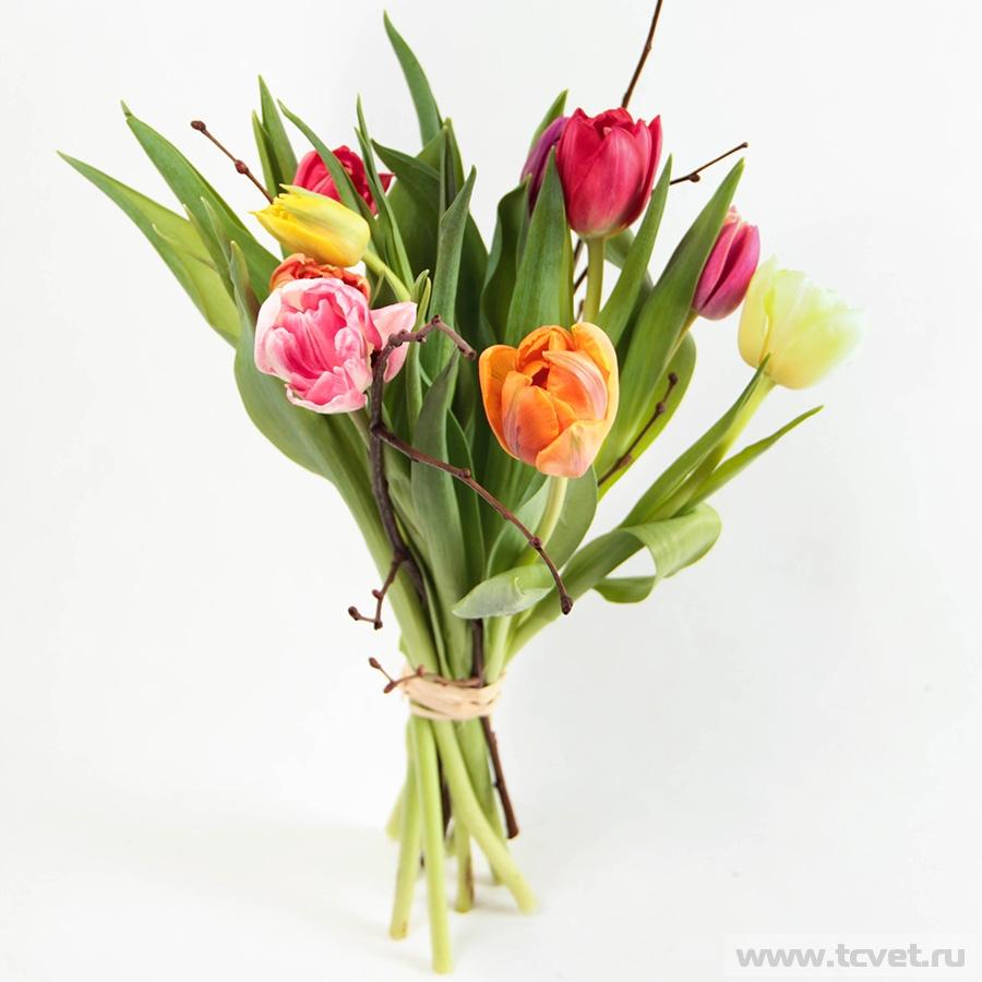 Тюльпаны микс М