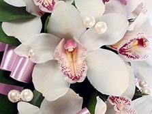 Жемчужная орхидея