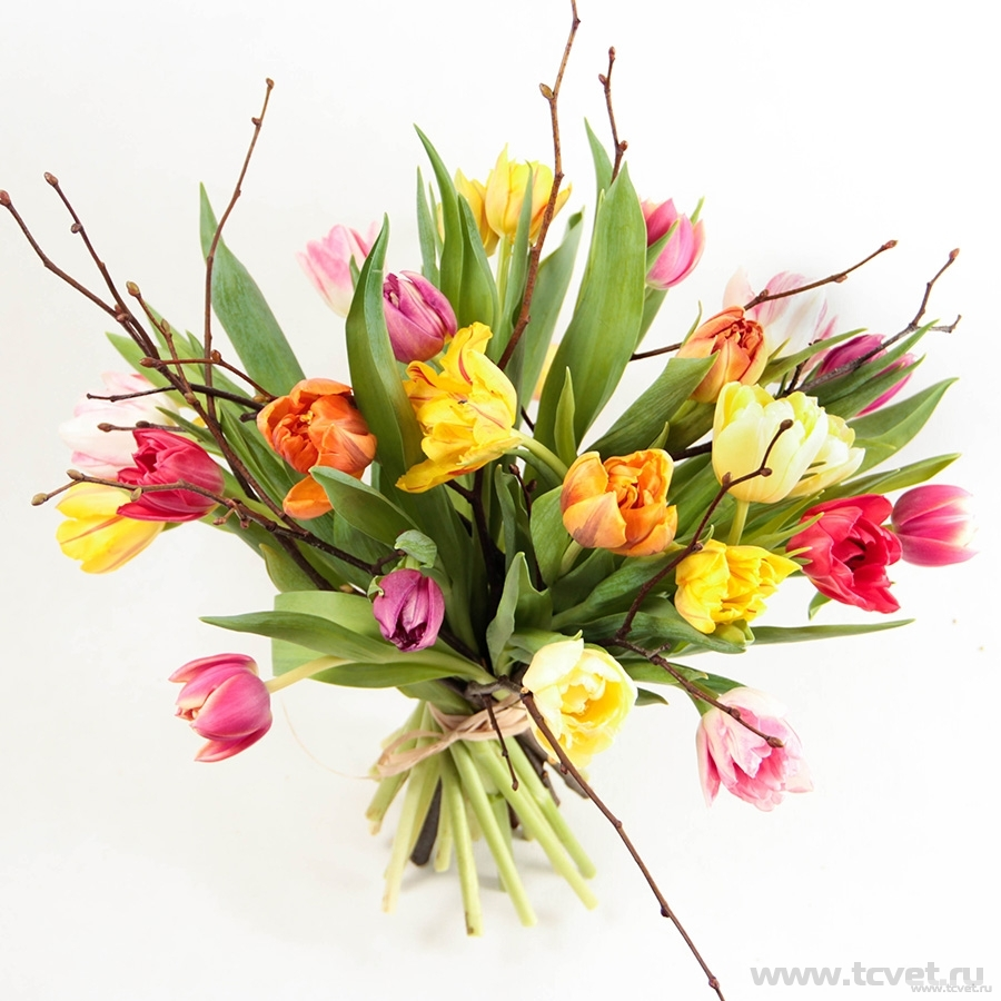 Тюльпаны микс XL