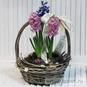 Цветы весны корзинка с гиацинтами