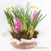 Весенний сад композиция в круглой коробке S