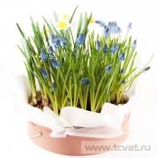 Весенний сад композиция в круглой коробке XL