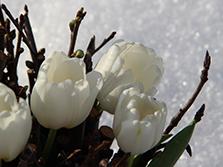 Зимняя свадьба с Белыми тюльпанами Кузьминки